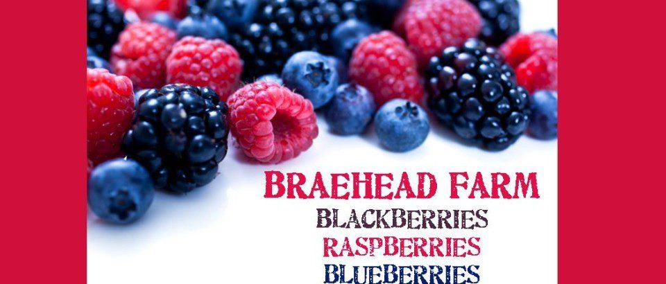 Berries for website