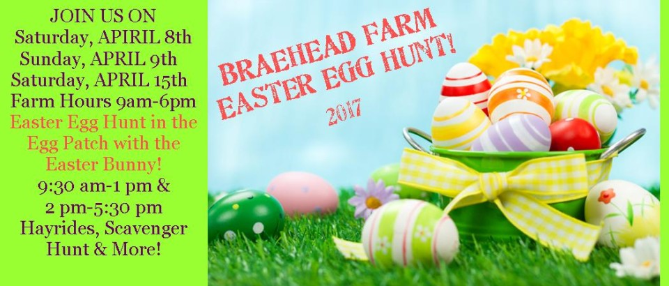 Easter+bunny+at+farm for FLYER 2017